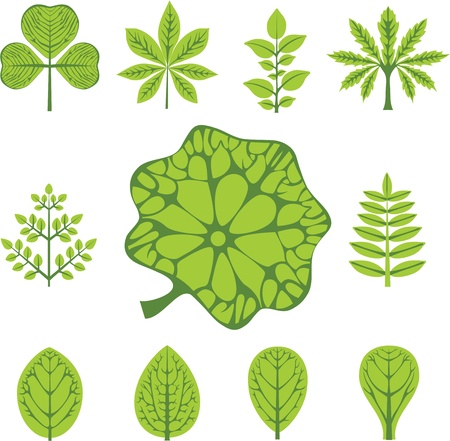 nervation: different  types of leaves Illustration