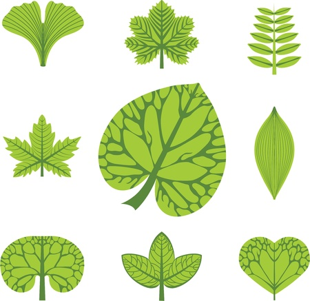 leafage: different  types of leaves Illustration