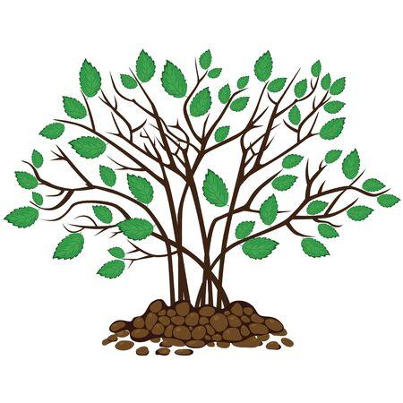 vegetable gardening: Bush with leaves in the soil