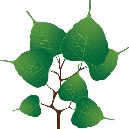Branch with green leaves,illustration Illustration