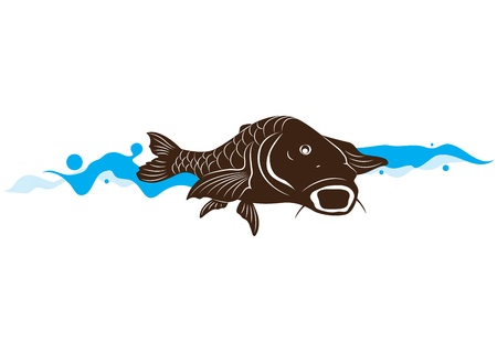 carp fish, illustration Vector