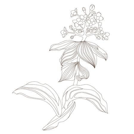 Floral design,  illustration Stock Vector - 17071861