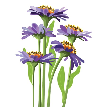 perennial:  floral design, purple aster