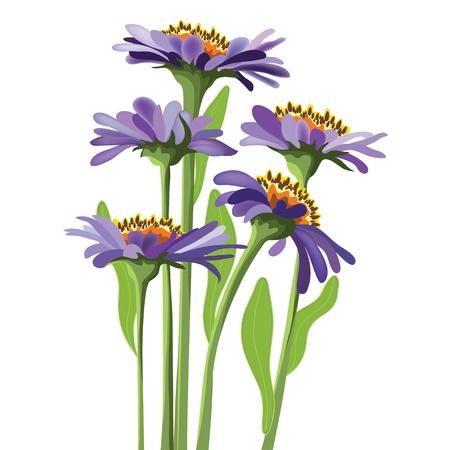 aster:  floral design, purple aster