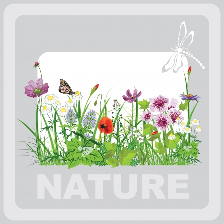 herbage: Green grass and flowers, landscape natural, banner in art Illustration