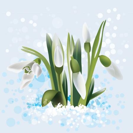 snowdrop in snow Stock Vector - 17360588