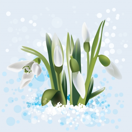snow forest: snowdrop in snow