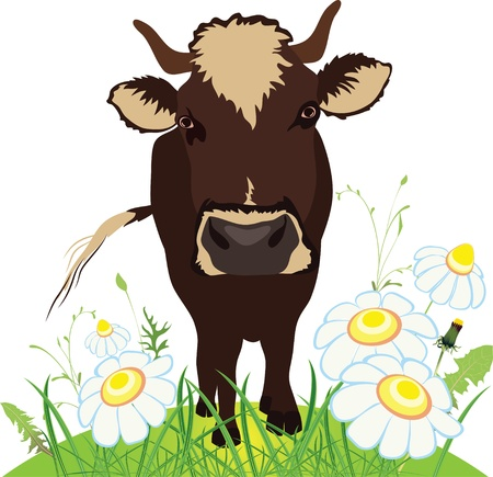 Cow on green field, grass and flowers, vector illustration Vector