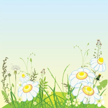grassy plot: Paisaje verde, flores y prado de hierba, ilustraci�n vectorial