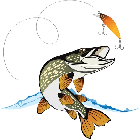 angler: Pike and fishing lure with water splash isolated on a white background, colored vector illustration Illustration