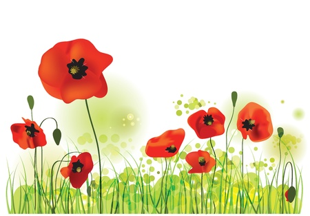 herbage: Red Poppies Field, summer landscape, vector illustration