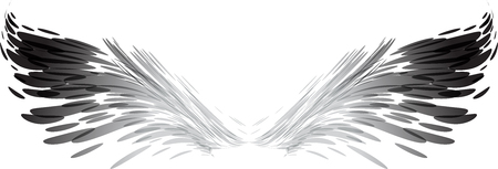 Abstract wings, black and white, vector illustration isolated on white background