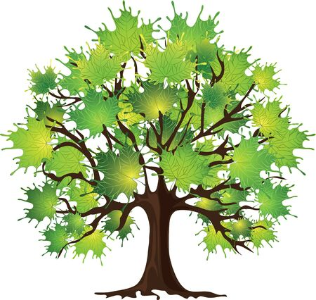 maple tree: Tree maple, green foliage, white background