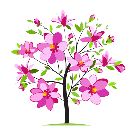 Blossoming magnolia tree on white background