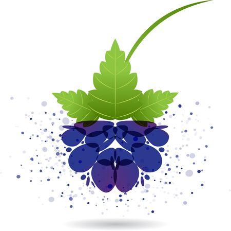 Blackberry splash vector isolated on white background