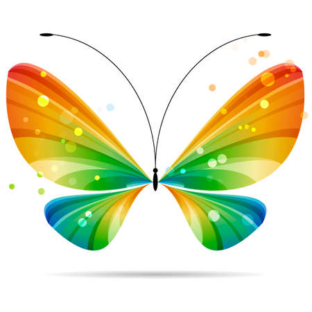 beautiful colorful multicolored striped butterfly on white background, black antennae, four wings, two pairs of wings