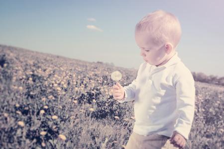 little boy child with dandelion flower in summer outdoors photo