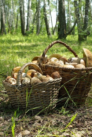 Two baskets of mushrooms in the forest in summer day Stock Photo