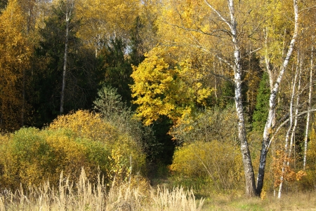 Autumn forest with coniferous and deciduous trees