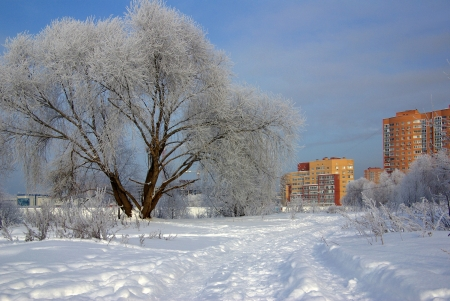 Frosty winter day in the Moscow region, Russia Stock Photo