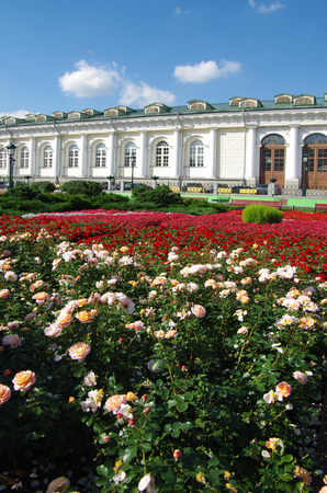 bove: MOSCOW, RUSSIA - September 14, 2015: Bright flowerbed in the Alexander Garden
