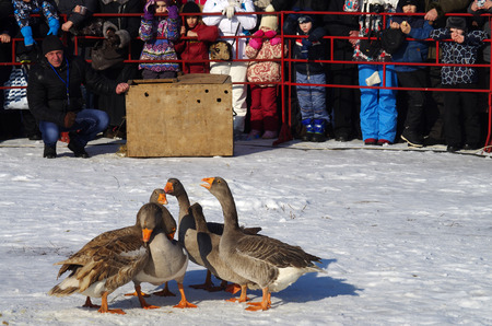 maslenitsa: SUZDAL, RUSSIA - February 21, 2015: Goose fights on Shrovetide - the celebration and folk festival, Suzdal. Maslenitsa or Pancake Week is the ancient Slavic Holiday Editorial