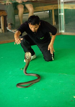 PATTAYA, THAILAND - January, 2013: Show of snakes performer play with a cobra during a show