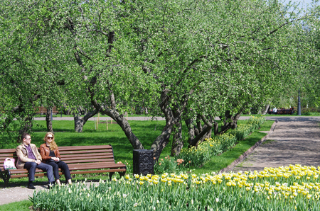 MOSCOW, RUSSIA - MAY 06, 2016: Old apple trees garden of Kolomenskoye park in Moscow, Russia Editorial