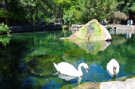 ALUPKA, CRIMEA-June, 2018: Swan in the garden of Vorontsov Palace 新聞圖片