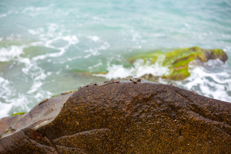 Mudskipper, life on the beach