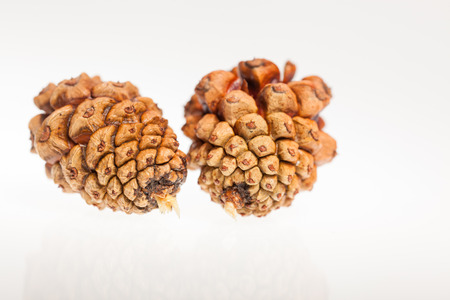 Pine nuts, put on a white background photo