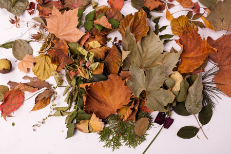A pile of leaves, the leaves of many plants photo