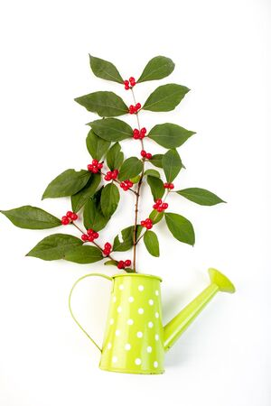 The kettle and plant
