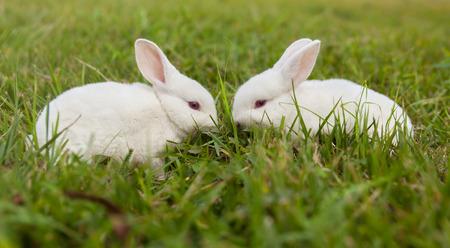 The little white rabbit Stock Photo