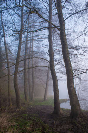 misty forest: Misty forest with foggy morning.