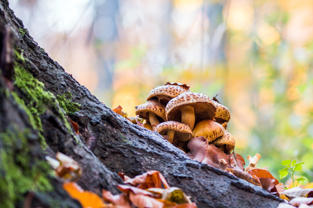Mushrooms in an autumn forest in the sunny day.