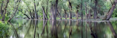 oxbow: Oxbow lake. Wetland landscape.
