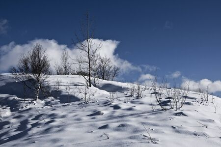 landforms: Trees on a winter day with a blue sky and clouds in a rural scene