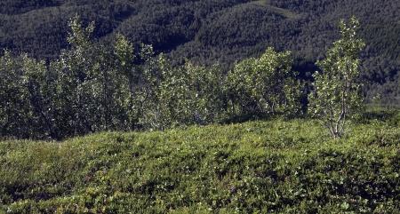 Terrestrial trees on mountain Stock Photo - 16331812