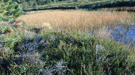 pinaceae: Grass Stock Photo