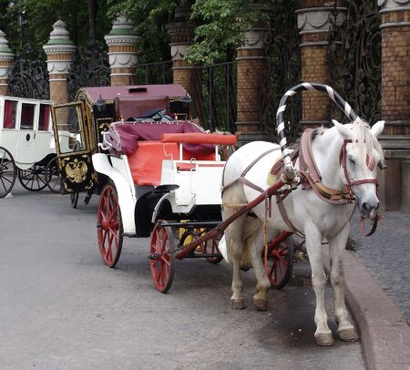 The carriage with a horse