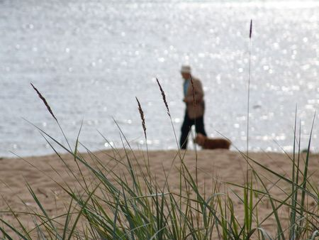 Grass at the sea