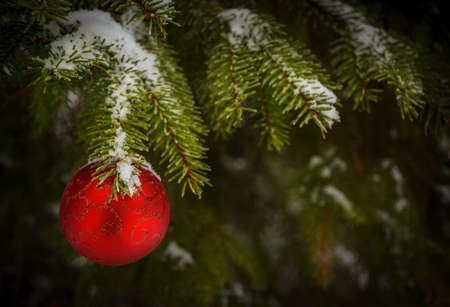 bedeck: red ball on christmas tree