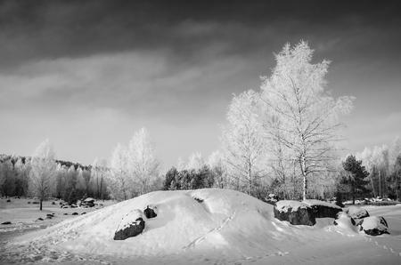 lejos: abedules transparentes en escarcha, nevado día de invierno Foto de archivo