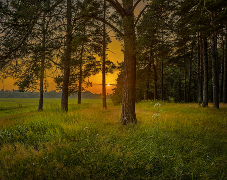 clearing: beautiful orange sunset, view from pine forest