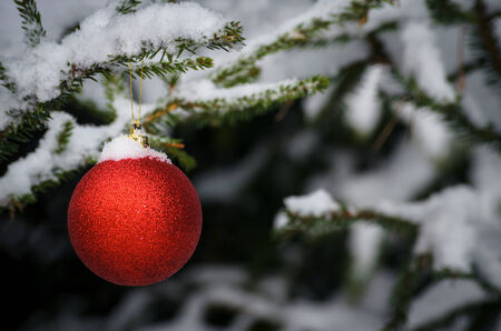 bedeck: xmas concept  red ball on green tree under snow