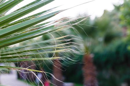 muir: John Muir National Historic Site palm trees