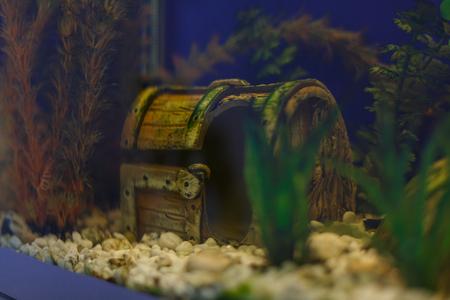 tresure: aquarium decor made from open chest with treasures Stock Photo