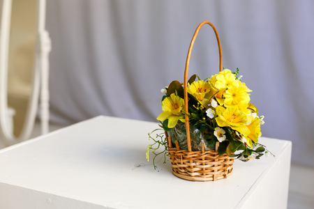 bouquet mimosa acacia flowers in a basket, on white basket with yellow flowers white background