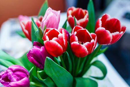 Spring flowers banner, bunch of red and pink tulip flowers Stock Photo